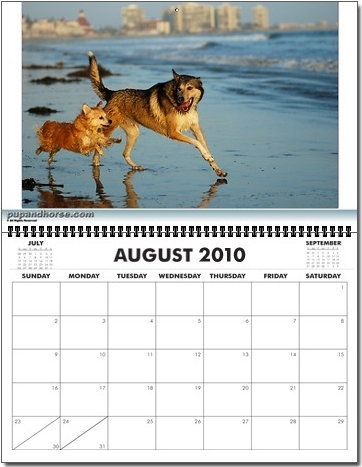 Los Angeles Pet Photographer - Calendar